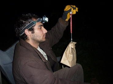 Santiago Martin weighs a gray bat near Kentucky's Green River.