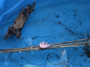 Testig the rafts