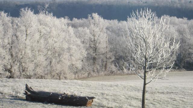 Frozen Fog in Palisades (Ken Brooks)