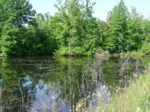 wetlandHwy24Davis9