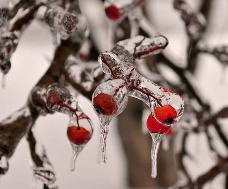 Winter Berries (Craig Dooley)